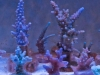 thumbs_panorama-pro-corals-2.jpg