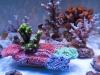 thumbs_panorama-pro-corals-3.jpg