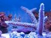 thumbs_panorama-pro-corals-5.jpg