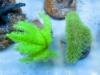 thumbs_panorama-pro-corals-9.jpg