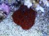 thumbs_reuven-tal-israel-reef-7.jpg