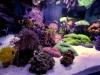 thumbs_siam-reef-2.jpg