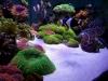 thumbs_siam-reef-4.jpg