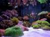 thumbs_siam-reef-6.jpg