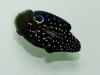 thumbs_sustainable-aquatics-marine-betta-5.jpg
