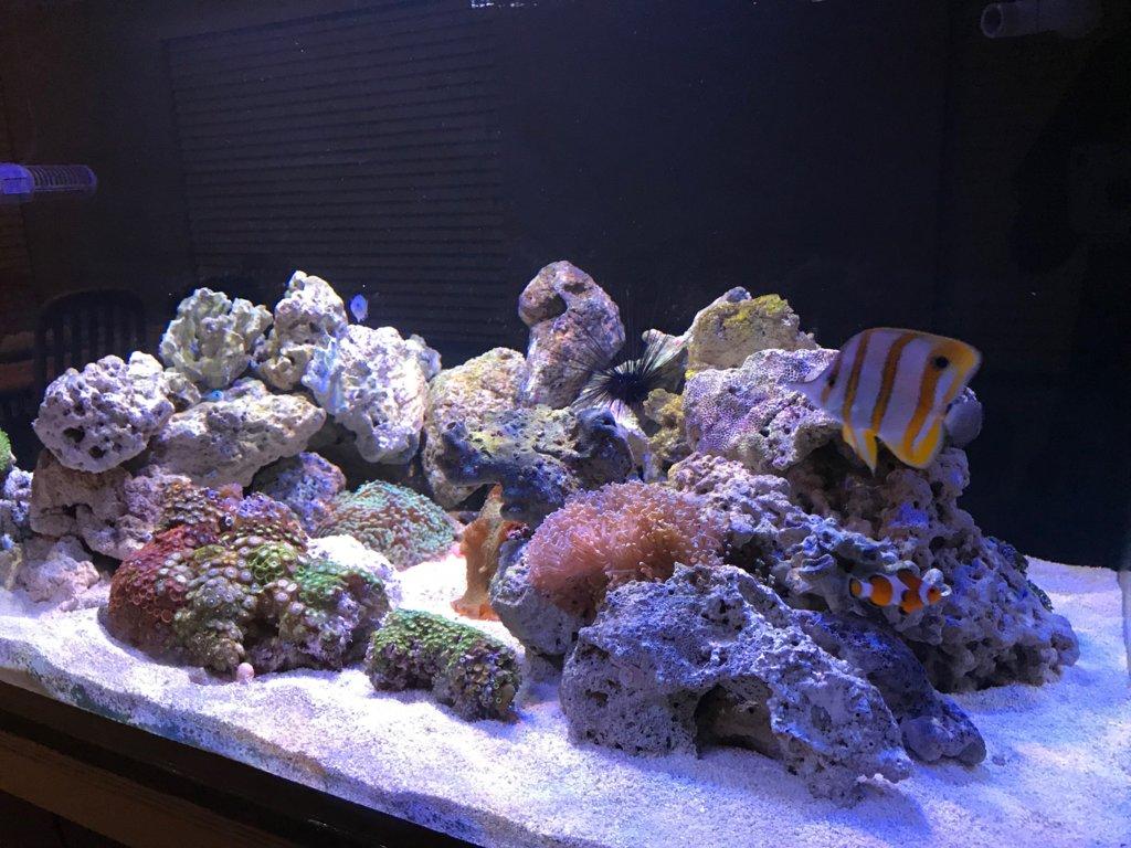 Traut's reef.jpg