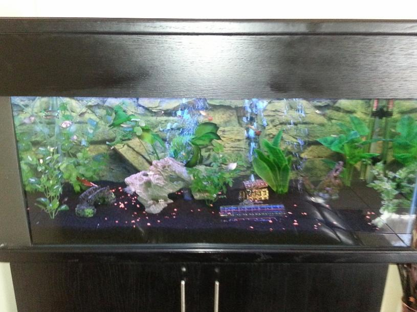 tropical tank1.jpg