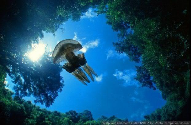 under_water_1.jpg