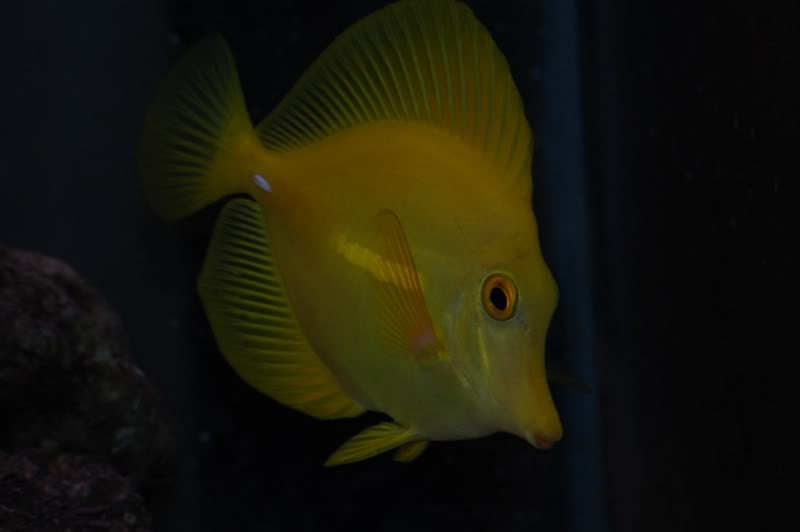 yellowtanglightroom2.jpg