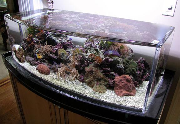 zero-edge-aquarium-2.jpg