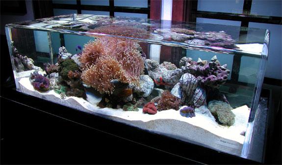 zero-edge-aquarium-4.jpg