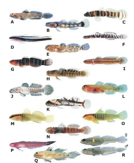 zoogeography-gobies.png