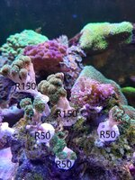 Various frags for sale
