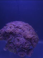 Hammer frags for sale