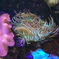 SmellLikeFish
