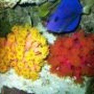 Reefmad