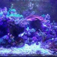 Reef-O
